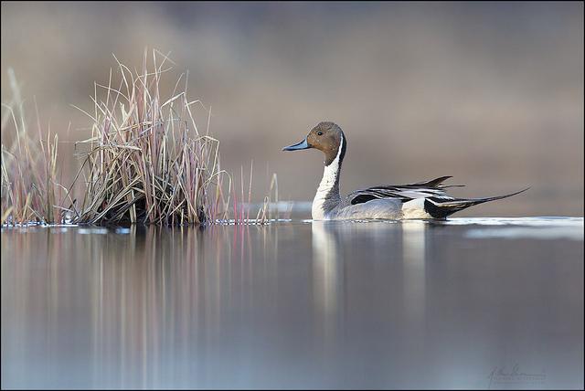 красивые птицы фото (20)
