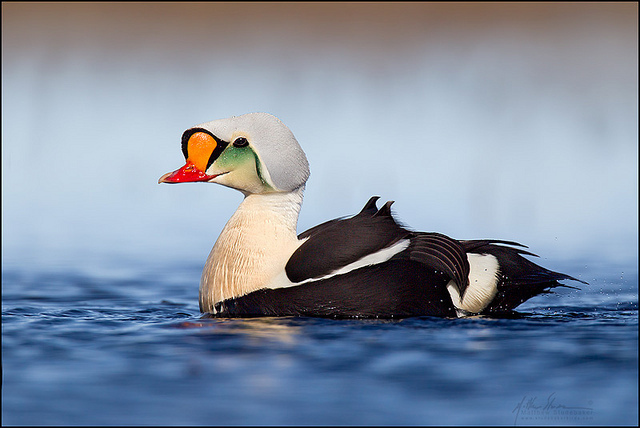 красивые птицы фото (2)