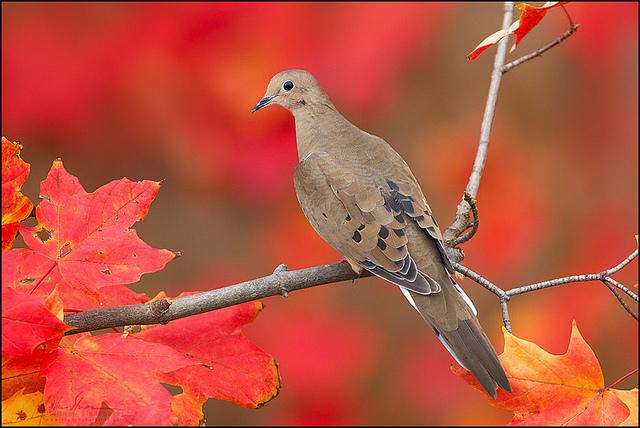красивые птицы фото (1)