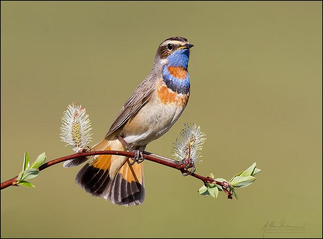 красивые птицы фото (18)
