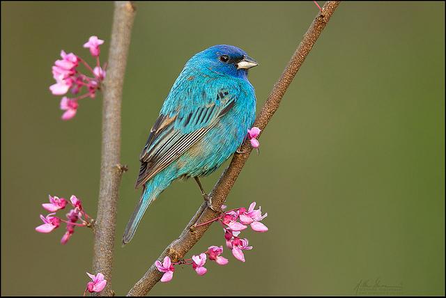 красивые птицы фото (16)