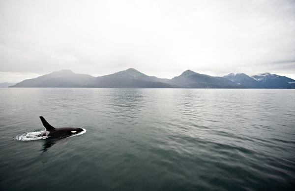 Аляска фотографии (1)