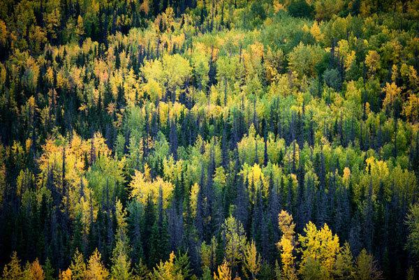 Аляска фотографии (16)