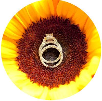 свадебные-кольца-на-подсолнухе
