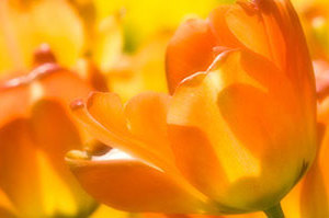 Великолепные фото весенних цветов от Nikhil Bahl